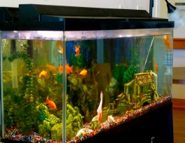 A fish aquarium makes the monastery Assisted Living more lively