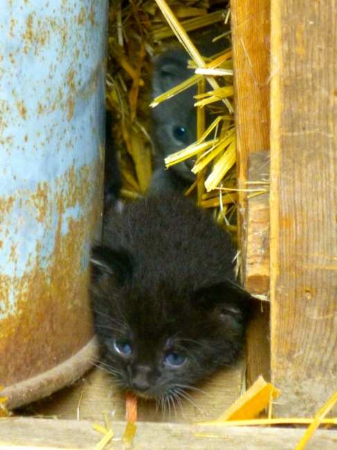 Newborn kittens at Mother of God Monastery